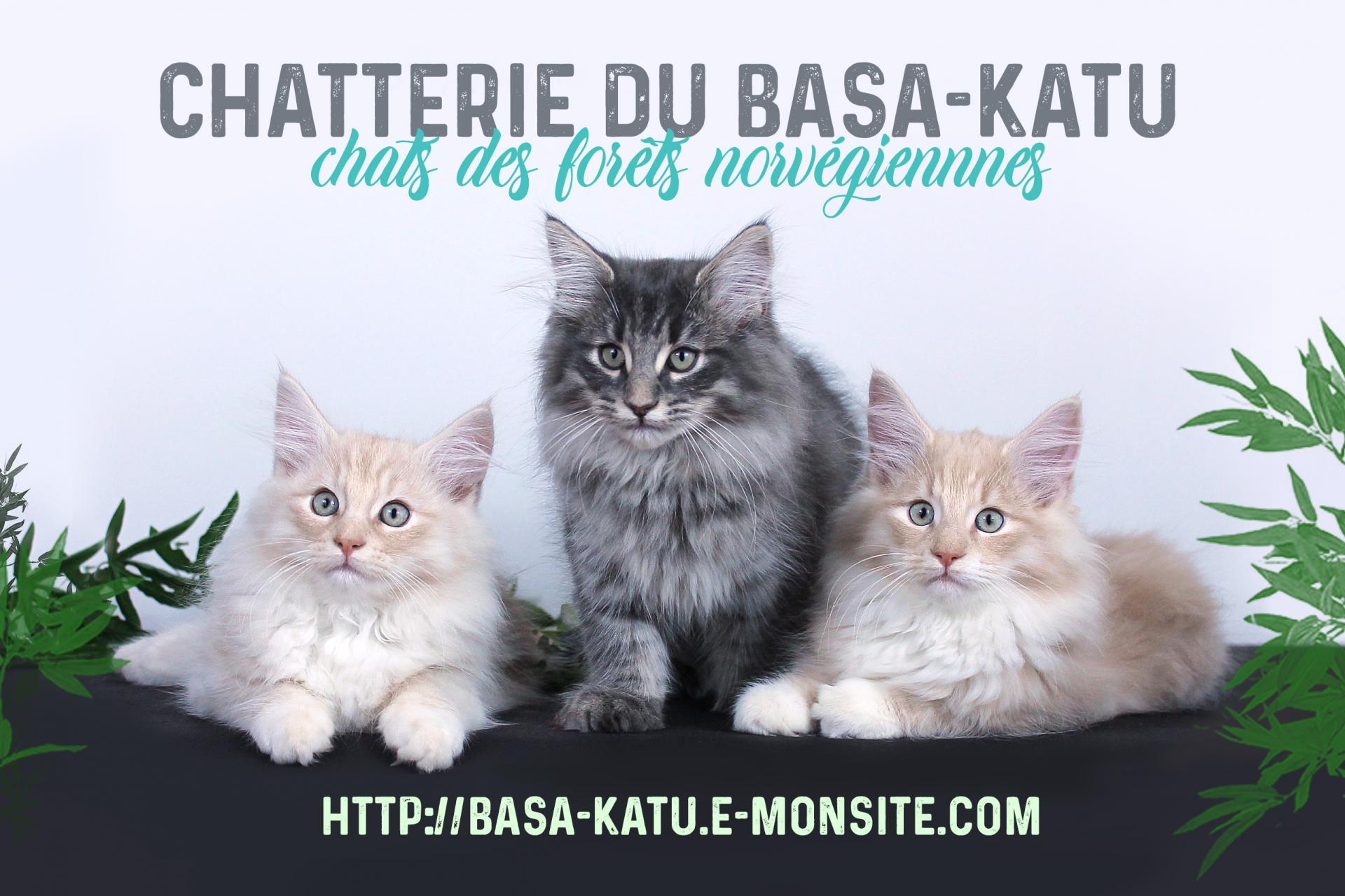 Chatterie du Basa-Katu - Facebook